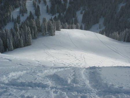 Edelweiss Tracks